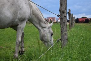 Weidezaun Info - Pferd hinter Zaun
