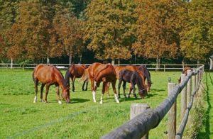 Weidezaun Info - Pferde auf der Weide