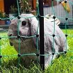 Weidezaun kaufen - Weidezaun Info Empfehlung Kaninchennetz Freilaufgehege