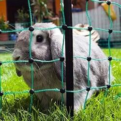 Kleintierzaun Kaninchennetz Hasengehege