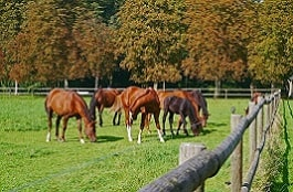 Pferde auf der Weide